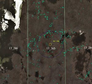 This photo contains approximately 350 caribou. Each green point represents 1 caribou.